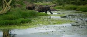 Limpopo National Park elephants